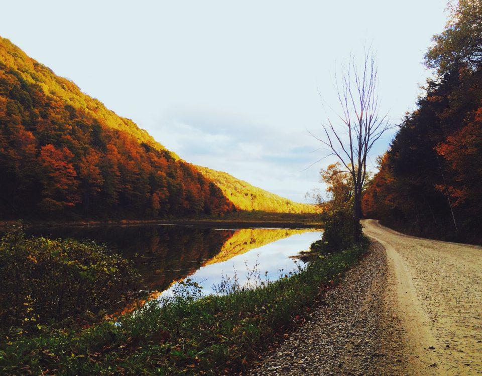 landscape-nature-forest-trees